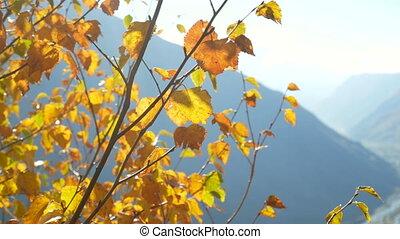 Mountain forest branch autumn