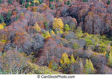 mountain forest in autumn color trees texture background