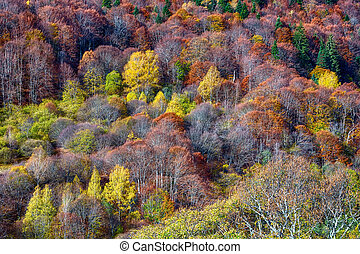 mountain forest in autumn trees texture background