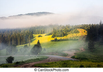 mountain forest in morning fog - mountain pine forest and...