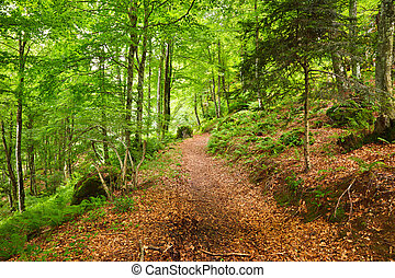 Mountain forest in Pyrenees