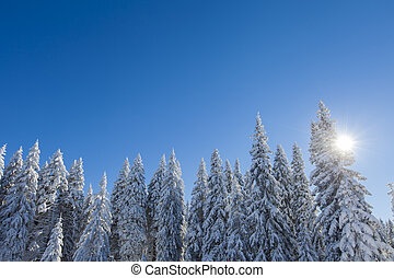 Mountain forest under the snow in winter