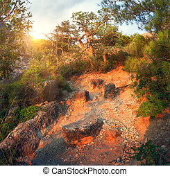 Mountain forest with trail at sunrise. Panoramic landscape