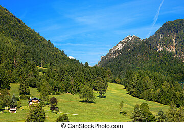 Mountain Forests - Valbruna Tarvisio Italy - Alpine...