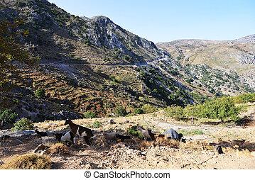 mountain goats - goats graze in mountains clones