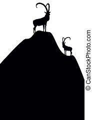 Mountain goats - Silhouettes of mountain goats standing on...