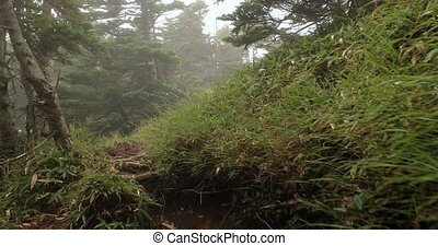 Hiking in mountain mist inside clouds on a trail on top of Mount Nantai, Japan