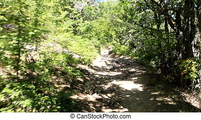 Mountain hiking along trail through deciduous forest. Sunny summer day