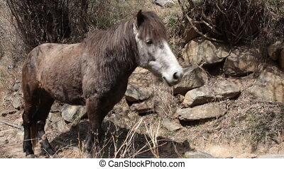 Mountain horse in springtime, shabby horse. Surroundings Of...