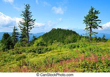 Mountain Klein Osser in National park Bavarian forest, Germany.