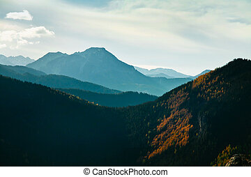 Mountain ladscape with trees