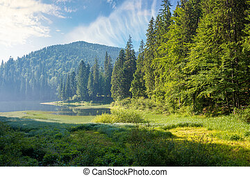 mountain lake among the forest in morning light. wonderful summer nature scenery with coniferous trees on the shore reflecting in the water. synevyr national park of carpathian mountains, ukraine