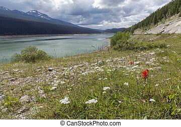 Mountain Lake and Wildflowers - Jasper National Park, Canada