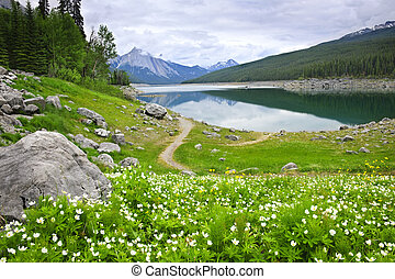Mountain lake in Jasper National Park, Canada