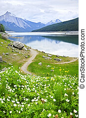 Mountain lake in Jasper National Park, Canada - Wildflowers...