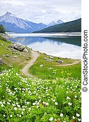 Mountain lake in Jasper National Park, Canada - Wildflowers...