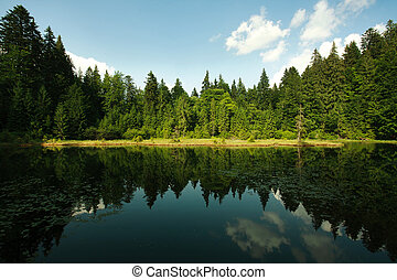 Mountain lake in spruce forest on a background of blue sky