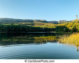 lake in the forest beautiful natural landscape