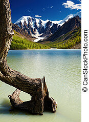 Mountain lake - Mountain landscape with lake and dead tree