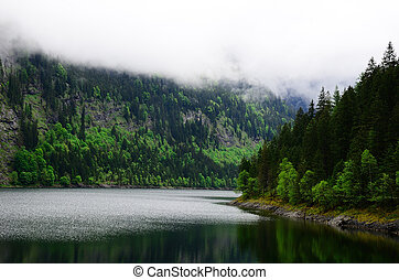 mountain lake with forest