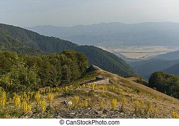 Mountain landscape at Central Balkan mountain with mullein or Verbascum flower, Beklemeto or Trojan pass, Stara Planiana, Bulgaria