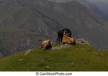 Mountain landscape, Caucasus, Georgia