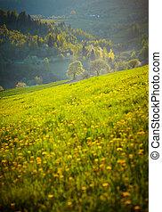 Mountain landscape - Eastern Carpathians mountains