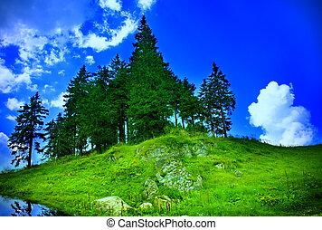 Mountain landscape - fir trees, grass and sky