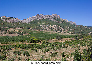 Mountain landscape in a cloudless summer day. Mountains and vineyard.