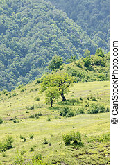 Mountain landscape in summer day