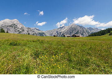 Mountain landscape in the Alps with flowers meadow. Austria, Walderalm.