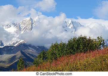 Mountain landscape in Upper Svaneti, zone of alpine meadows