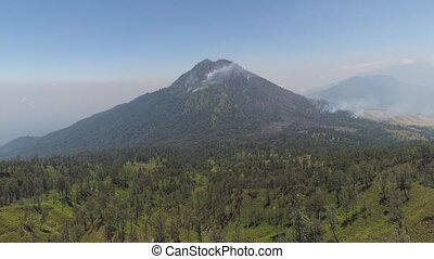 mountain landscape slopes mountains with covered with green tropical forest. Java, Indonesia. aerial view mountain forest with large trees and green grass.