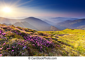 mountain landscape - Magic pink rhododendron flowers on...