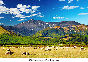 Mountain landscape with grazing sheep, New Zealand