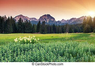 mountain landscape - Majestic morning mountain landscape in...