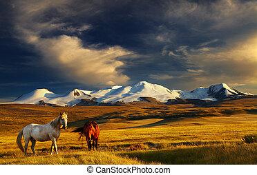Mountain landscape - Grazing horses at sunset, plateau Ukok,...