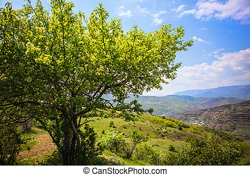 Mountain landscape with a beautiful tree
