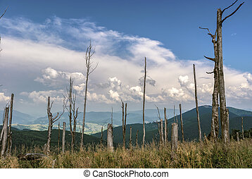 Mountain landscape with dry trees on a clear day.