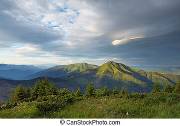 Mountain landscape with fir forest on the slopes - Mountain...