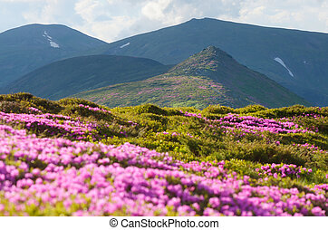 Mountain landscape with flowering rhododendron