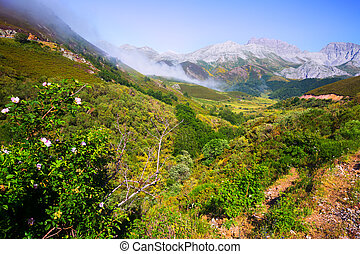 mountain landscape with fog in summer