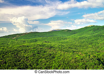 Mountain landscape with green trees. Composition of Nature.