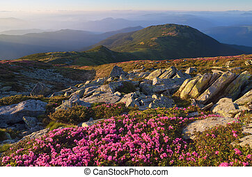 Mountain landscape with rhododendron