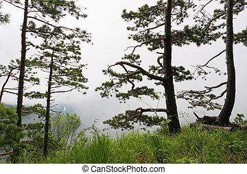 Mountain landscape with silhouettes of pine trees
