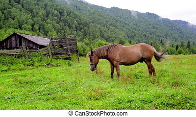 Mountain landscape with the old wooden house and a horse. Altai