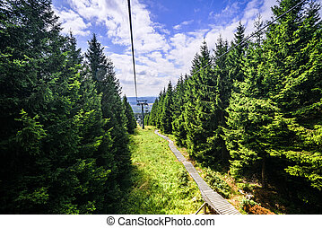 Mountain lift in the summer with pine trees