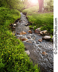 Mountain Meadow with Creek - Green grass and yellow flowers ...