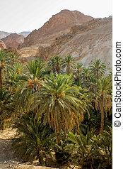 Mountain oasis Chebika in Tunisia