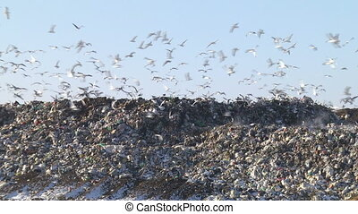 Mountain Of Garbage Waste Plastic Bottles Packages Of Rotting Food